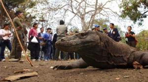 Mulai 15 Agustus, Taman Nasional Komodo Akan Dibuka