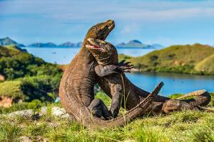 Taman Nasional Komodo Dapat Kebijakan konkuren Untuk Dikelola