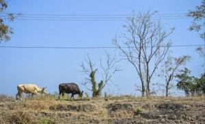 BMKG Sebut Bali, NTB dan NTT Beresiko Tinggi Alami Kekeringan